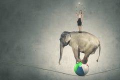 Weiblicher Unternehmer mit Lampen und einem Elefanten Lizenzfreies Stockbild
