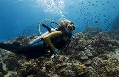 Weiblicher Unterwasseratemgerättaucher Lizenzfreies Stockfoto