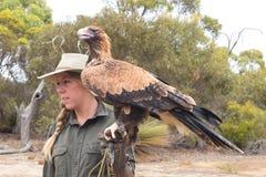 Weiblicher Vorführer mit Keil angebundenem Adler Stockbilder