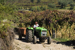 Weiblicher Weinhändler, der den Traktor im Weinberg fährt stockfoto