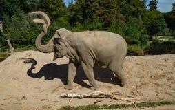Weiblicher werfender Sand des asiatischen Elefanten Stockfotografie