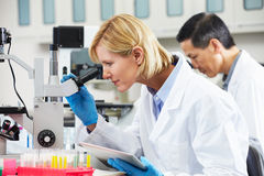 Weiblicher Wissenschaftler, der Tablette-Computer im Labor verwendet Lizenzfreie Stockfotografie
