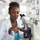 Weiblicher Wissenschaftler, Student oder Technologie des Afroamerikaners arbeitet mit a stockfotos