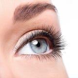 Weibliches Auge der Schönheit mit den langen falschen Wimpern der Locke Stockbilder