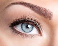Weibliches Auge der Schönheit mit den langen falschen Wimpern der Rotation Stockbild
