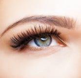 Weibliches Auge mit den langen Wimpern Stockbild