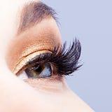 Weibliches Auge mit den langen Wimpern Stockfoto