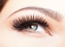 Weibliches Auge mit den langen Wimpern Lizenzfreies Stockbild