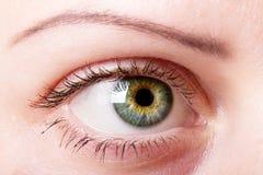Weibliches Auge mit Verfassungsabschluß oben Stockbild