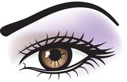 Weibliches braunes Auge
