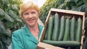 Weibliches Glashausangestelltporträt zeigt einen Kartonkasten voll Gurken Gesundes Produktproduktionskonzept stock video