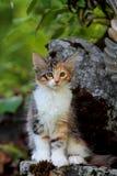 Weibliches Kätzchen der norwegischen Waldkatze, das auf einem Stein sitzt stockfotografie