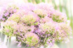 Weich gedämpfte rosa Blumen stockfotos
