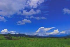Weiche Ansichten der Dorfreisfelder stockfotografie