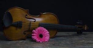 Weiche Beleuchtung der zurückhaltenden Violine und der rosafarbenen Blume Lizenzfreie Stockfotografie