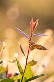 Weiche Blätter, Weichzeichnung Stockbilder