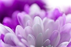 Weiche Blume Stockfotografie