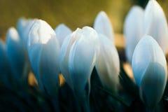 Weiche Blumen up und persönlich stockbilder