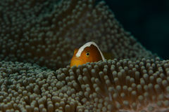 Weiche Coral Glow lizenzfreie stockfotos