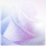 Weiche Farbrose auf Maulbeerpapierbeschaffenheit Lizenzfreies Stockfoto