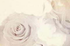 Weiche Farbrose auf Maulbeerpapierbeschaffenheit für romantischen Hintergrund Stockbilder