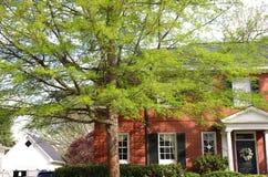 Weiche Federblätter auf ausbreitendem Baum lizenzfreie stockfotografie