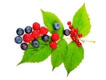 Weiche Früchte Lizenzfreies Stockbild