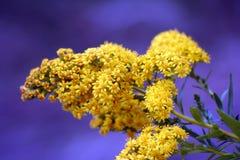 Weiche gelbe Blumen stockfotografie