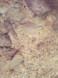 Weiche geschälte Schildkröte stockfotografie