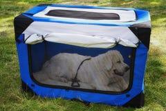 Weiche Haustierkiste, tragbare Hundehütte Stockfotos