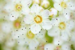 Weiche helle Blüte Lizenzfreie Stockbilder