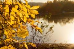Weiche Herbstlandschaft, reflektiert im ruhigen Wasser lizenzfreies stockbild
