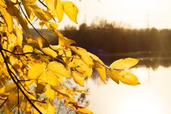 Weiche Herbstlandschaft, reflektiert im ruhigen Wasser lizenzfreie stockfotografie