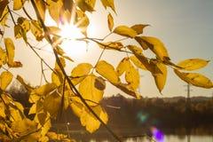 Weiche Herbstlandschaft, reflektiert im ruhigen Wasser stockfotos