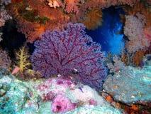 Weiche Koralle Stockbild