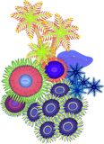 Weiche Koralle Stockbilder