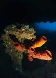 Weiche Koralle des Rohrs innerhalb des Wracknamens ist SS Thistlegorm stockbild