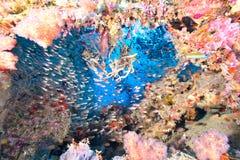 Weiche Koralle und Fische stockbilder