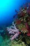 Weiche Korallen betrachten die Sonne über dem Haifischriff stockfotografie