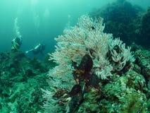 Weiche Korallen- und Rifffische Lizenzfreie Stockbilder