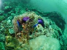 Weiche Korallen- und Rifffische Lizenzfreie Stockfotos