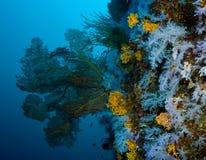 Weiche korallenrote Wand Lizenzfreie Stockfotografie