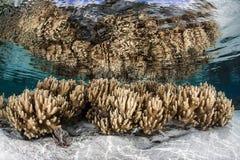 Weiche lederne Korallen Lizenzfreie Stockfotos
