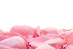 Weiche rosafarbene Blumenblätter Lizenzfreie Stockfotos
