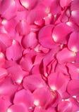 Weiche rosafarbene rosafarbene Blumenblätter Stockfoto