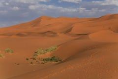 Weiche rote Dünen, blauer Himmel, weiße Wolken Lizenzfreie Stockfotos