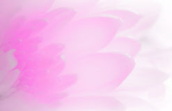 Weiche Schatten des Blumenblattes der süßen süßen Art ausstellungsraum Lizenzfreie Stockfotografie
