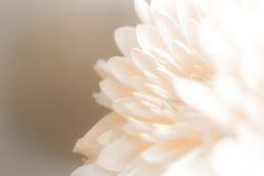 Weiche Schatten des Blumenblattes der süßen süßen Art ausstellungsraum Stockfotografie