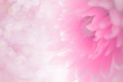 Weiche Schatten des Blumenblattes der süßen süßen Art ausstellungsraum Lizenzfreies Stockbild