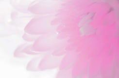 Weiche Schatten des Blumenblattes der süßen süßen Art ausstellungsraum Lizenzfreies Stockfoto